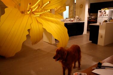 Lily.bruno